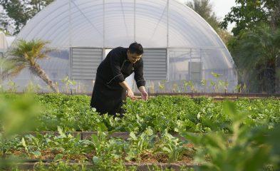 Chiva-Som - Organic Garden with Chef Paisarn